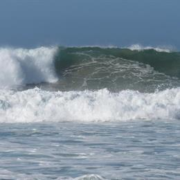 Windfall Plett, in the nearby from Witsand