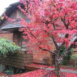 Homestay in Totara Heights near Westfield Manukau City, in the nearby from Hills Beach