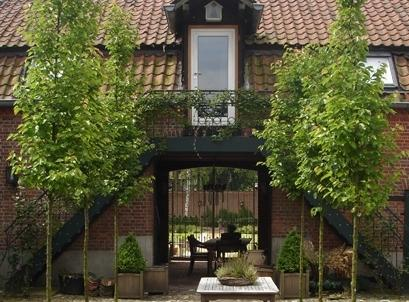 Casa Ciolina Hotel Limburg_20