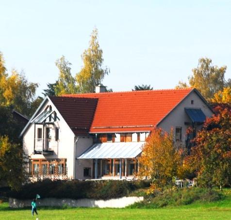 Hirsch im Grunen