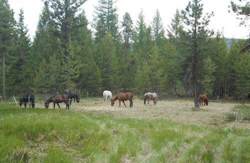 Dream Haven Guest Ranch
