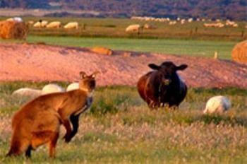 Flinders Chase Farm Stay
